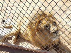 Lion Habitat Ranch – Adventures and Bucketlist