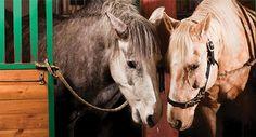Kuusekännu ratsutila sijaitsee Pohjois-Virossa 69 km Tallinnasta. « Kuusekännu ratsutila sijaitsee Horses, Animals, Animales, Animaux, Horse, Animal Memes, Animal, Animais, Dieren