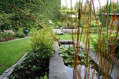 Garten H, Baden bei Wien | Landschaftsarchitektur Schmidt Rennhofer Schmidt, Plants, Landscape Diagram, Bathing, Plant, Planets