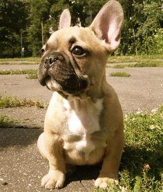 bat-pig-bunny-dog