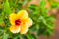 Flower / mkro / bokeh by ChristianThür Photography on Creative Market Bokeh, Yellow Flowers, Summertime, Christian, Creative, Plants, Photography, Macros, Photograph
