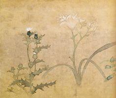 尾形光琳 四季草花図巻 |Ogata Korin seasonal flowering plants illustrated books