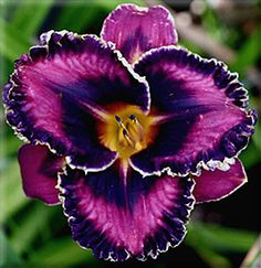 This incredible flower is called Queen's Circle- double edge! (Daylily, Hemerocallis)
