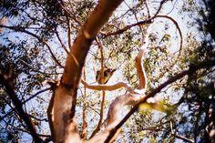 Saw a wild koala today. I don't even know where this is. #wheredoesandrewgoh #aussienation  #melbourne #victoria #onlyinmelbourne #warrnambool #greatoceanroadadventure #leica #leicalove #leicam240 #leicamp240 #leicaphoto #35mmfolks #cosina #voigtländer by droobieee