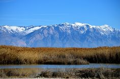 Wasatch Mountains behind the Bear River Migratory Bird Refuge in Utah.