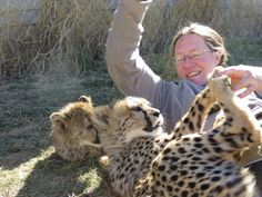 play time Conservation, Cheetah, Lion, Play, Cats, Animals, Leo, Gatos, Animales