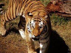 fotografia 100 de animais selvagens