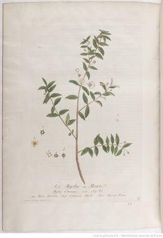 Myrthe, La botanique mise à la portée de tout le monde... Exécuté et publié par les Sr et De Regnault.... Tome 2   1774 Tattoo, Pattern, Inspiration, Art, Notebooks, Botany, Plant, Biblical Inspiration, Craft Art