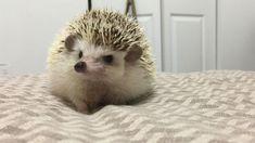 Meet Larry the hedgehog. My sweet-n-spiky son.
