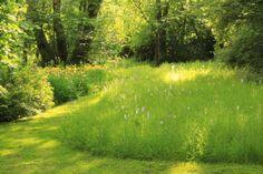 Dit. Voor in de boomgaard en op de randen van het grote grasplein.