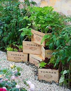 old wine cases/crates as planters