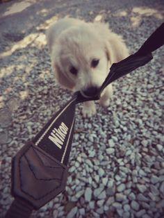 #Pets #puppy #Nikon