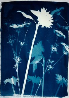 Canotypes- Anna Atkins timeless blues