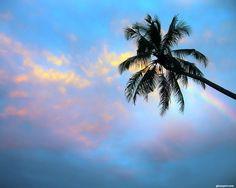 Palm Tree Wallpaper | Palm Tree Wallpaper by ~nxxos on deviantART