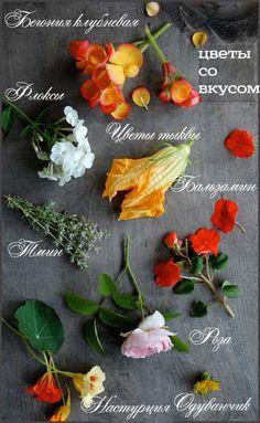 А знаете ли вы, что цветы бывают съедобными? Бегония, флоксы, тыква, бальзамин, тмин, роза, настурция, одуванчик послужат прекрасным украшением ваших вегетарианских блюд. Удивите родных, любимых или устройте праздник только для себя! А еще с ними можно сделать прелестные кубики льда для напитков!