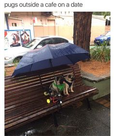 Funny, Memes, Pictures: Pugs-outside-a-cafe-on-a-date