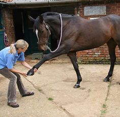 North Horse: 5 Things To Do With Your Horse in 15 Minutes