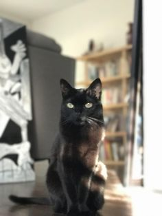 The calm after the storm that was flea treatment http://ift.tt/2odAxbw