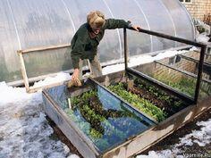 The Best Ways to Grow Vegetables in Winter – PreppersGab