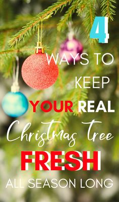 A real live Christmas tree makes the holiday season magical! These 4 tips are sure to keep your evergreen tree fresh all season long. Christmas Tree Care, Live Christmas Trees, Merry Christmas, Hanging Christmas Lights, Christmas Yard, Christmas Makes, Christmas Pictures, Family Christmas, Christmas Themes