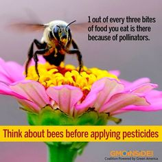 Think about bees before applying pesticides. More Here: http://www.tri-cityherald.com/2013/09/08/2563813/think-about-bees-before-applying.html#storylink=cpy