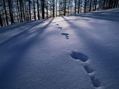 Animal tracks in the snow... I wonder what it was that passed this way?