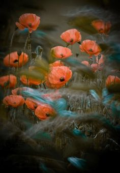 A flower, garden, plants and floral art photography by international garden photographer of the year Magda Wasiczek Macro Photographers, Flower Artists, Fotografia Macro, Happy Paintings, Soul Art, Red Poppies, Photo Illustration, Illustrations, Artist Art