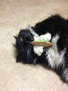 This is Meadow from Whitehall, PA. Meadow is a Tuxedo. Meadow is one of the three winners from Cat Addicts Anony-mouse Easter Kitty Contest. Meadow is enjoying her Easter Cookie. Big THANKS to Meadow's mom for sending these great pictures! || Handmade by Fido the Cat