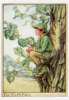 The ELM Fairy ~ Cicely Mary Barker ~
