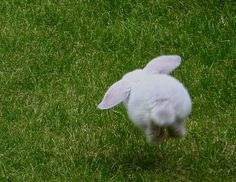 """I looked at this photo and asked myself  """"what is this"""" then I saw the white little puffy tail and said """"it's a bunny"""". So sweet"""