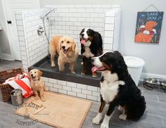 Dog friendly mudroom transitional laundry room standard but what were we to do i wasnt about to keep lucy indoors all day what kind of life is that see her dog shower idea solutioingenieria Images
