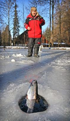 Der Fisch, der aus der Kälte kam