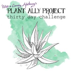 Plant Ally Project Thirty Day Challenge! This project is for those who: Are ready to learn how to build meaningful and powerful relationships with a plant ally. Want to transition from a casual interest in herbal medicine to a more invested one. Are seeking to reinvigorate and find new inspiration in their herbal practice. Worts + Cunning Apothecary