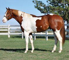 APHA stallion, Fade To Fame.