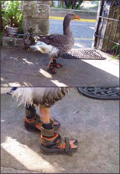 Pull up to the scene looking fresh af - Imgur