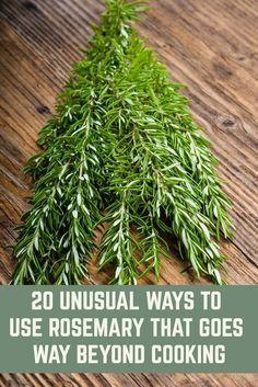 Rosemary Plant, How To Dry Rosemary, Grow Rosemary, Rosemary Ideas, Healing Herbs, Medicinal Plants, Herb Recipes, Rosemary Recipes, Herbs For Health