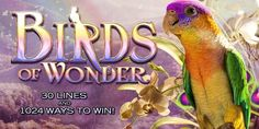 Play Birds of Wonder slot machine online at Slotorama, featuring 1024 ways to win. From High 5 Games!