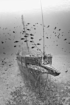 Maui's most famous abandoned ship wreck, the Carthaginian Abandoned Ships, Abandoned Places, Underwater Shipwreck, Ghost Ship, Photography For Sale, Art Photography, Tall Ships, Underwater Photography, Titanic