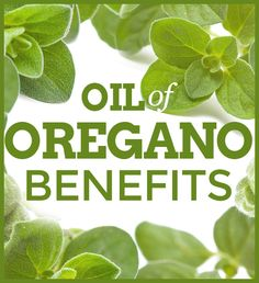 Oregano is an herb used to make oregano oil, with antioxidant, anti-inflammatory and antimicrobial properties. Learn about oregano oil benefits. Terra Essential Oils, Essential Oil Uses, Young Living Oils, Young Living Essential Oils, Herbal Remedies, Natural Remedies, Herbs For Depression, Oregano Oil Benefits, Indoor Grow Lights