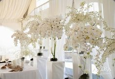 White Orchids Artificial Flowers For Wedding Table Centerpieces Table Garland Flowers Butterfly Orchid Phalaenopsis Red Wedding Centerpieces, Orchid Centerpieces, Orchid Arrangements, Wedding Flower Arrangements, Wedding Reception Decorations, Wedding Ideas, Centrepieces, Wedding Pictures, Wedding Ceremony