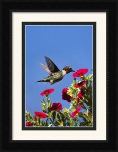 Moments Of Joy By Christina Rollo. Photo prints, canvas prints, acrylic prints, metal prints, framed art for sale. Buy art online © www.rollosphotos.com #hummingbird #bird #animal #art #rollosphotos