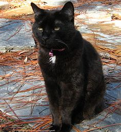 Old Cats, Panther, Pepper, Adoption, Pets, Blog, Animals, Foster Care Adoption, Animales