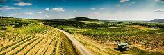 Slovakia, Tokaj region