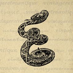 Printable Image Snake Graphic Download Digital Illustration Antique Clip Art. High resolution digital illustration from antique artwork for printing, transfers, and more. Great for etsy products. This digital graphic is high quality at 8½ x 11 inches large. Transparent background version included with every graphic.