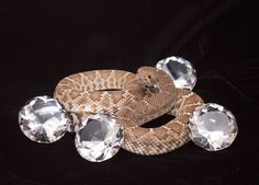 See 'Diamonds of the Desert' through August 31, 2013 at the Arizona-Sonora Desert Museum. Don't miss this unique exhibit celebrating the Museum's 60th diamond jubilee. View this collection of rare-colored diamond-backed rattlesnakes paired with beautiful diamond gemstones!