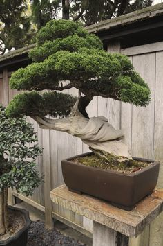 Twisted Thick Bonsai by AndySerrano.deviantart.com on @deviantART
