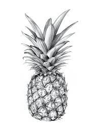 pineapple draw ile ilgili görsel sonucu