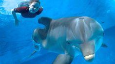 L'Incroyable Histoire de Winter le dauphin 2 film complet en Français