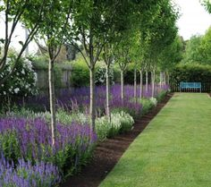 Birch and lavender, lovely combination!