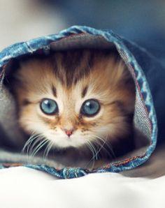 Todays Cuteness:) By Ben Torode  even if u r not a 'cat lover<3' this' kitten is irrestible..